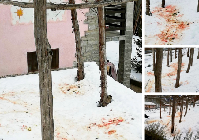 attacco lupo sangue neve viganella mix