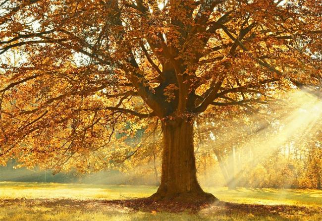 autunno sole pianta prato